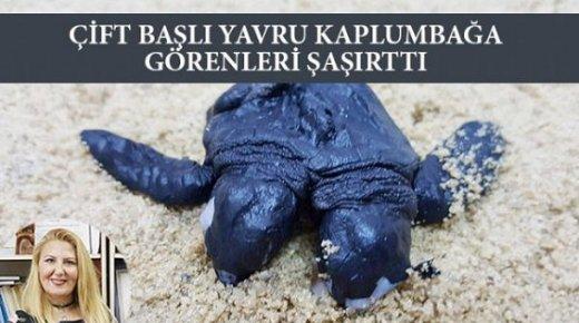 Mersin'de Çift Başlı Kaplumbağa Görenleri Şaşırtıyor