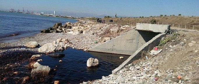 Mersin'de Doğa Katliamı