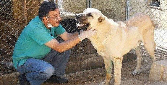 Mersin'de Felçli Sokak Köpeği Hayvan Barınağında Sağlığına Kavuştu