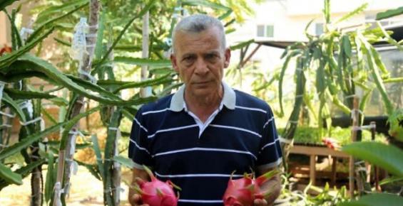 Mersin'de 'Pitaya' Meyvesi Yetiştirildi
