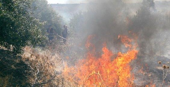 Mersin'de  Sazlık ve Bahçelik Alanda Yangın