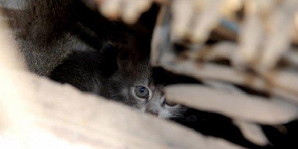 Mersin'de Trafoya Giren Kedi Operasyonu