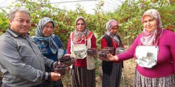 Mersin'de'de Yılın İlk Karadut Hasadı Başladı