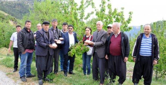 Mersin'deki Dolu Tarım Ürünlerine Zarar Verdi