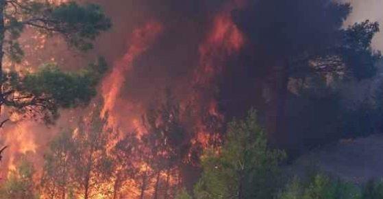 Mersin'deki Orman Yangınında 15 Hektar Alan Zarar Gördü