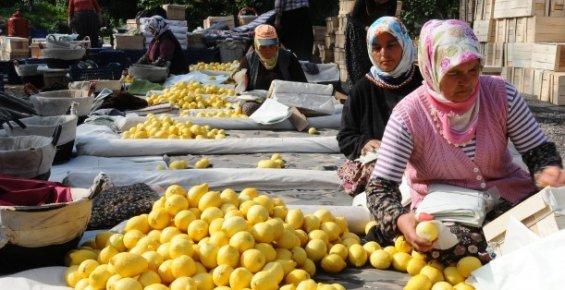 Mersin'in Tarımsal Üretimde ki Başarısı