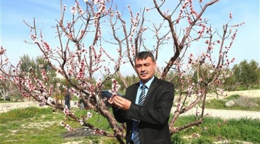 Mut'ta Kayısı Ağaçları 10 Gün Önce Çiçek Açtı