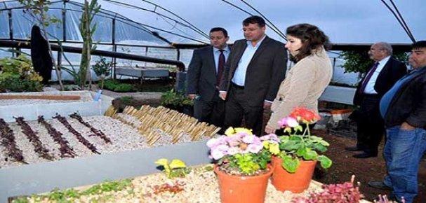 Silifke Belediyesi'nden Saksı Çiçek Uygulaması