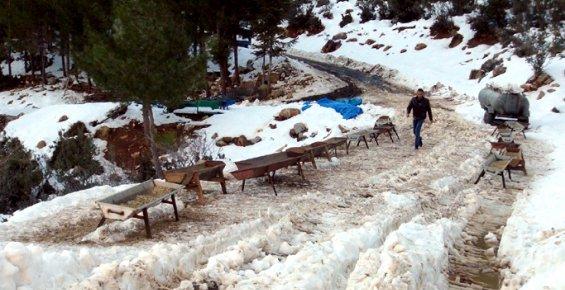 Silifkeli Çiftçiler İçin Kar, Beyaz Berekete Dönüştü