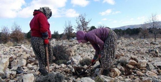 Silifkeli Genç Kızlar Çeyizlerini Ormandan Kazanıyor