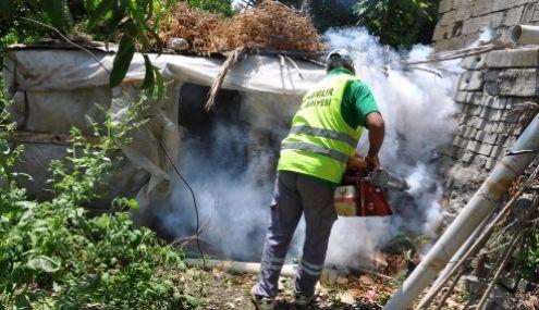 Sivrisinek Şikayetleri Erken Başladı