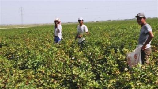 Tarım İşçileri 40 Derece Sıcakta Mesai Yapıyor