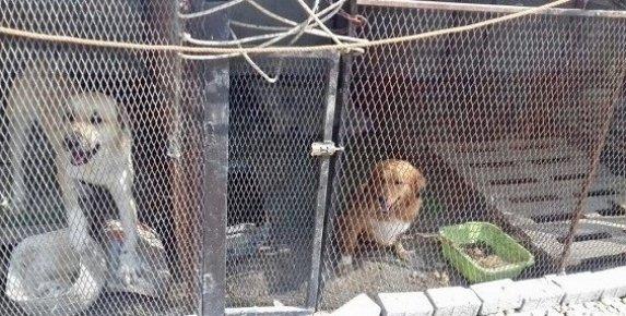 Tarsus'ta Sahipli ve Sahipsiz Hayvanlara Denetim