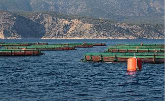 Çevreciler Tepkili: Dana Adası Açığında Balık Çiftliği Kuruldu