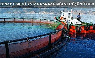 Mersin'de 4 Yeni Alanda 60 Balık Çiftliğine İzin Verildi.