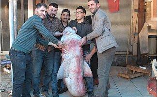 Mersin'de Balıkçıların Ağına 300 Kiloluk Köpek Balığı Takıldı