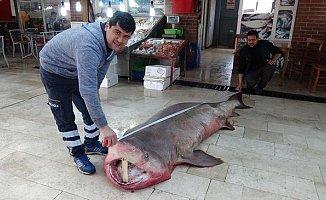 Silifke'de 4 Metrelik Köpek Balığı Yakalandı
