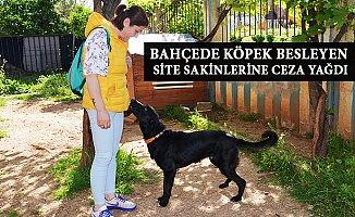 Mersin'de Site Bahçesinde Köpek Besleyenlere Ceza Yağdı