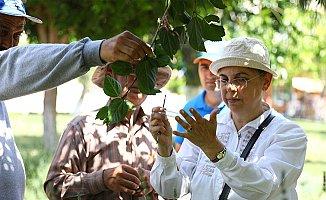 Mersin'de Doğayı Uğur Böcekleri Koruyacak