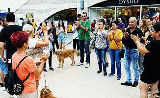 Patileri Kesilerek Katledilen Köpek İçin Protesto