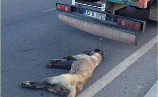Köpeğin Cansız Bedeni Kilometrelerce Sürüklendi