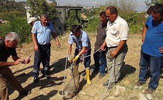 Çiftçilerin Üzümünü Yiyen Yavru Domuzu Düştüğü Kuyudan İtfaiye Kurtardı
