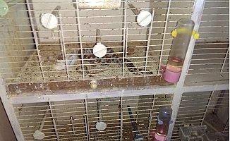 Evine Giren Yılan Beslediği Kuşu Yedi