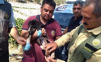Alevlerin İçinde Kalan Köpeği Ormancılar Kurtardı