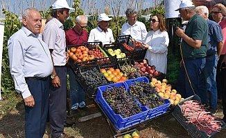 Mersin'de 'Domates Tarla Günü' etkinliği