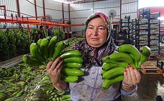 Türkiye'nin 400 Bin Ton Muz Açığını Silifke Kapatacak