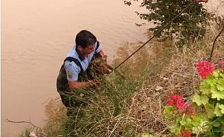 Göksu Irmağı'na Düşen Köpek Kurtarıldı