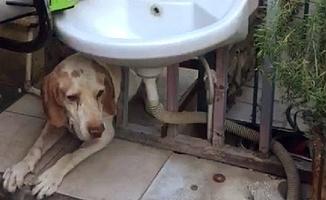 Parmaklıklara Sıkışan Köpek Kurtarılmayı Bekledi
