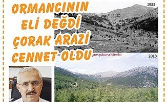 Tarsus'da 35 Yıl Sonra Ağaçlandırma Çalışmaları Meyve Verdi
