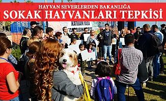 Sokak Hayvanları Tasarısına Mersin'den Tepki
