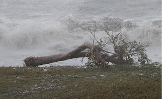Mersin'de Fırtına Ağaçları Yerinden Söktü