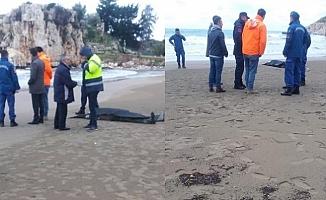 Mersin'de Tekne Alabora Oldu: 1 Ölü