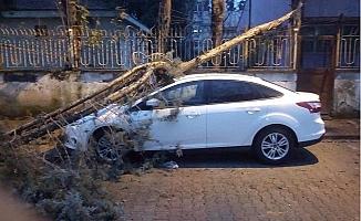 Mersin'i Gündüz Fırtına, Akşam Sağanak Yağmur Vurdu