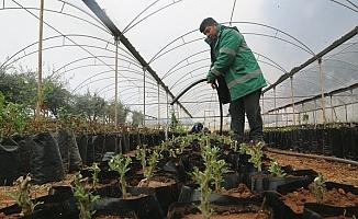 Erdemli Belediyesi Bahara Hazır