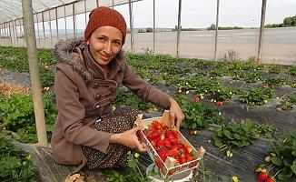 Mersin'den Irak'a Çilek İhracatı Başladı