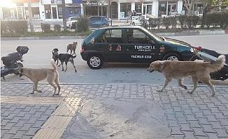 Mut'ta Başıboş Köpekler Korku Saçıyor