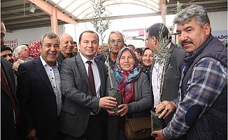 Mut'ta Çiftçilere Zeytin ve Ceviz Fidanı Dağıtıldı