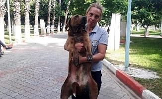 Bıçaklanan Sokak Köpeği, Tedavi Edildi