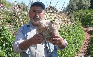 Erdemli'de Dolu, Tarım Arazilerini Vurdu