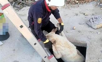 Köpeğin İmdadına İtfaiye Yetişti
