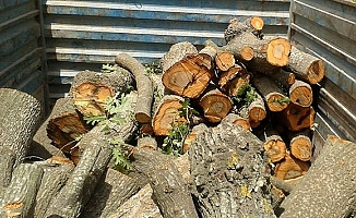 Mersin'de Orman'dan 61 Adet Kaçak Kesilen Ağaç Yakalandı