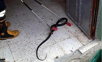 Apartman Girişindeki Yılanı, İtfaiyeciler Yakaladı