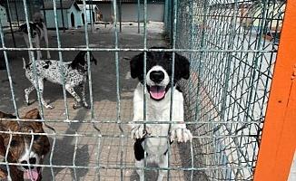 Tarsus Köpek Bakım ve Islah Evi Onarıldı
