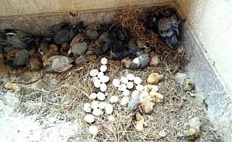 Yavru Kuşlar Sıcaktan Öldü