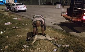 Tarsus Belediyesi Ekipleri, Yaralı Köpeğe Anında Müdahale Etti