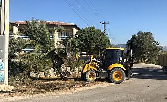 Silifke'de 44 Hurma Ağacı İmha Edildi.